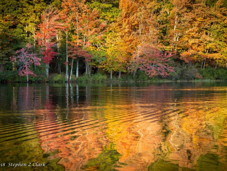 fall foliage reflecting in river