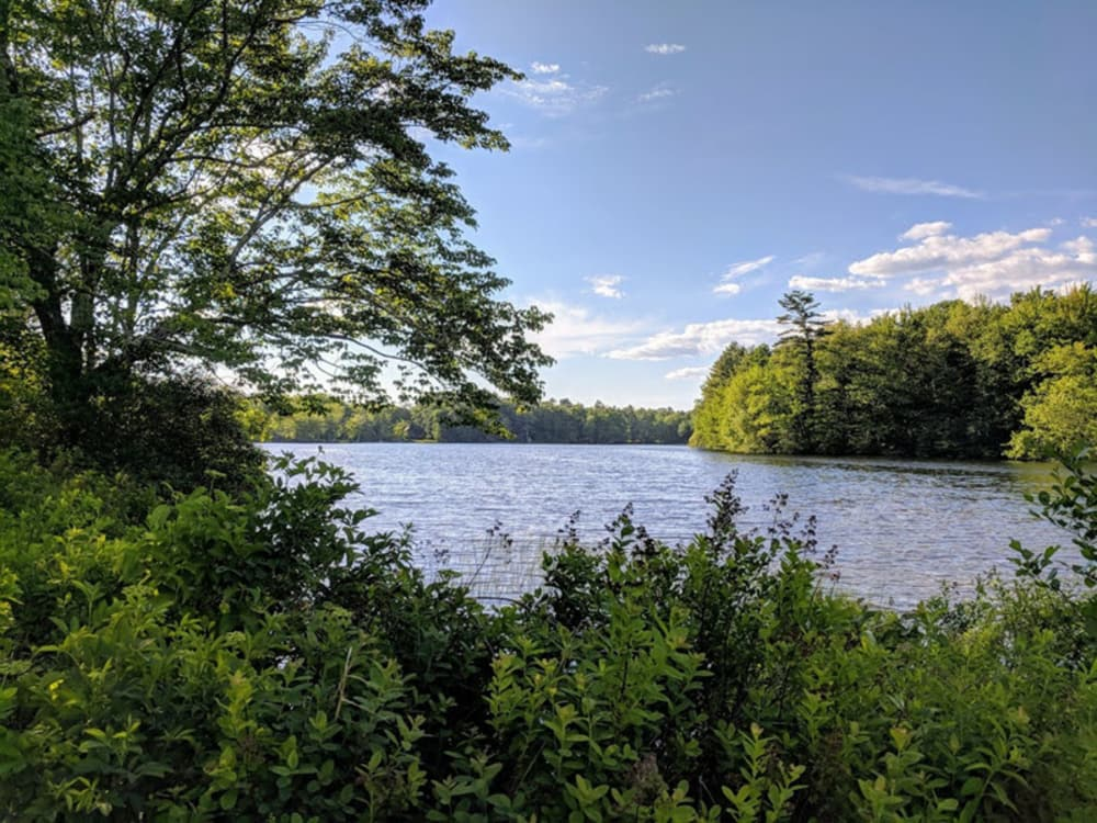 body of water surrounded by trees